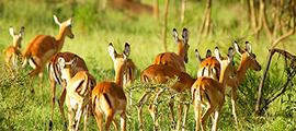 3-days-mburo-safaris