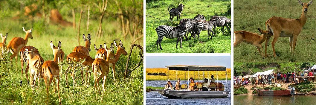 lakemburo-tour-uganda-safari